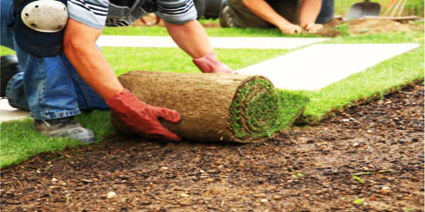 lawn turfing services you can trust